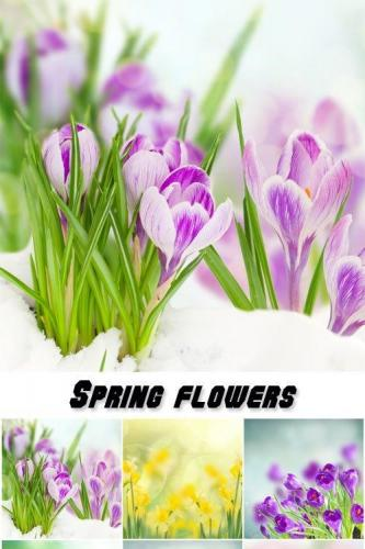 Spring flowers, tulips, crocuses, hyacinths