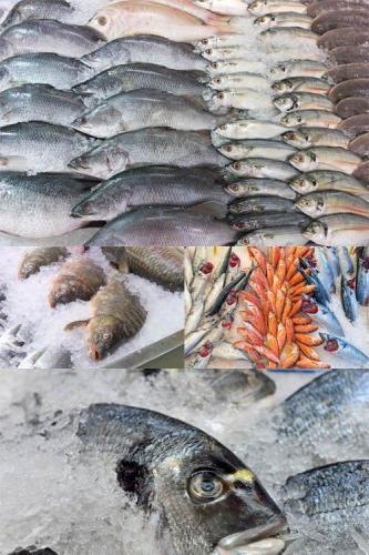 Fresh Fish Set