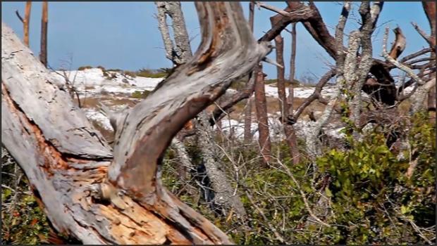 David-nudes_com- Tatyana Island Frolic